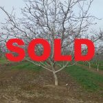Land for sale, orchard in 1849 Olive Ave, Patterson5